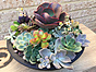 more on Sunshine Succulents - One of kind in cool pottery pot