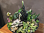 Photo of Sunshine Succulents - One of kind in cool pottery pot
