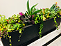 more on Sunshine Succulents - 35cm -urban -charcoal- rectangle -table -runner -