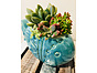more on Sunshine Succulents - Aqua  colour ceramic fish 25cm in length full of colour