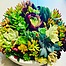 more on Sunshine Succulents -white -bowl- 23cm -full -of -colour-