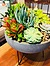 more on Sunshine Succulents - charcoal -ucculent bowl -30cm-diameter -