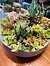 Photo of Sunshine Succulents- 30cm succulent bowl -
