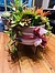 more on Sunshine Succulents-pink bowl with wooden base  13 cm -