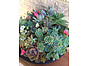 more on Sunshine Succulents - Black terrazzo bowl 30cm full to the brim with succulents