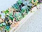 more on Sunshine Succulents-white - rustic - timber - table -runner -55cm -