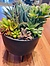 more on Sunshine Succulents-charcoal 13cm bowl with wooden base -