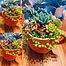 more on Sunshine Succulents-funky orange succulent bowl with legs -