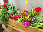 Photo of Sunshine Succulents - Rustic timber planter box 45cm in length full of colour
