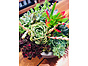 more on Sunshine Succulents- white- wok - bowl- 23cm -